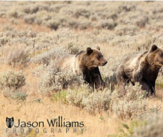Wildlife safari combo package Grand Teton National Park